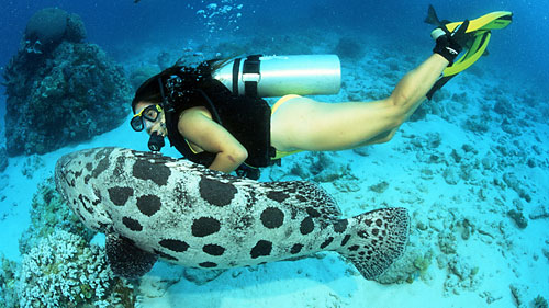Lizard island australia - Best place to dive the great barrier reef ...